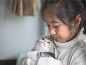mèo scottish ngọt ngào tình cảm