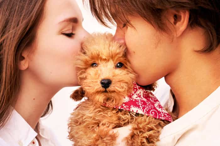 Thú cưng là sợi dây kết nối tình cảm giữa hai người đang yêu