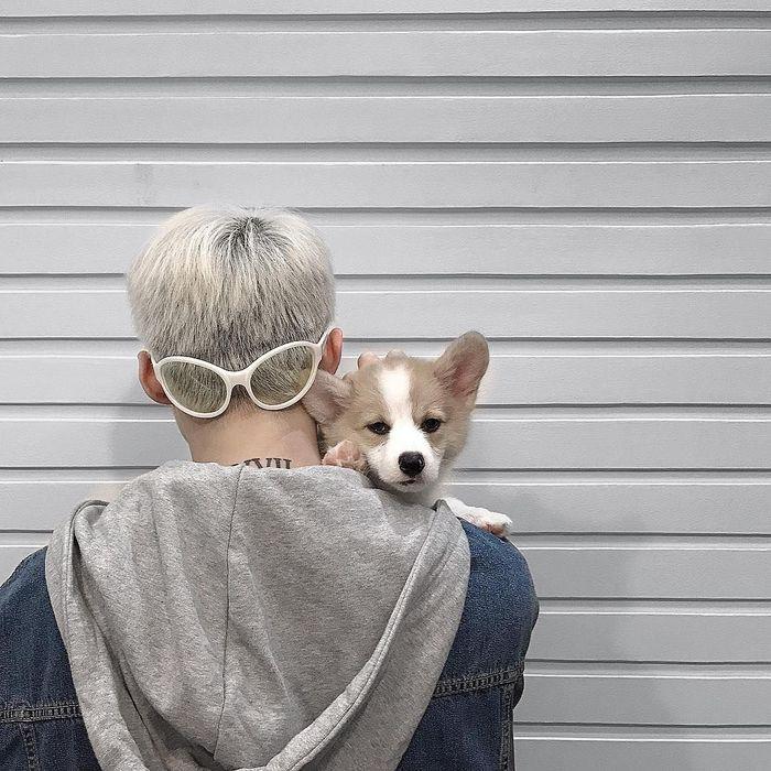 10 đặc quyền tuyệt vời khi sở hữu thú cưng