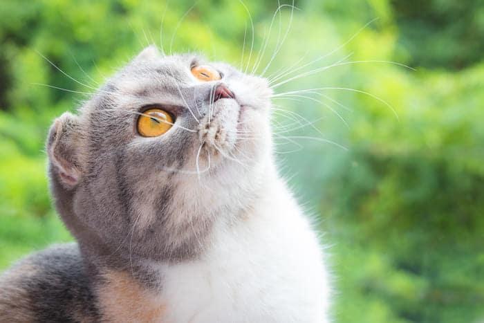 11 Giống Chó, Mèo Nhất Định Phải Sở Hữu Trong Đời